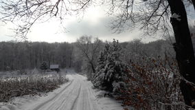 Winter Russia forest Royalty Free Stock Images