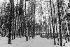 Winter in Russia. stock image