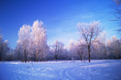 Winter Russian park. Winter park with birchs in Russia at sunset Royalty Free Stock Photo