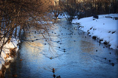 Winter Russian Park, mirror in pond or river and ducks. It is sunset time. Winter Park duck pond river Stock Photo
