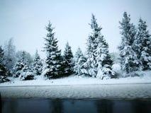 Winter& x27; s传说 库存照片