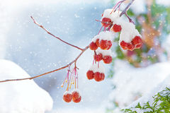 Winter's Beautiful Bounty Stock Photo