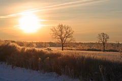 Winter& x27; s piękno Zdjęcia Stock