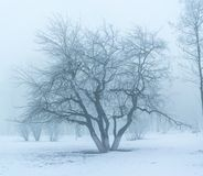 Free Winter`s Tale Stock Images - 105230334