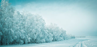 Winter forest. Вeautiful frosty forest and snowy road Royalty Free Stock Photo