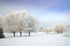 Winter's Tale Royalty Free Stock Images