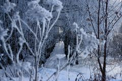 The winter`s tale ,a miracle of Russia. Winter miracle, delightfully, in Russia came frosts, whiter than white, Nizhny Novgorod region, snow fairy tale stock photography