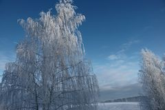 The winter`s tale ,a miracle of Russia. Winter miracle, delightfully, in Russia came frosts, whiter than white, Nizhny Novgorod region, snow fairy tale stock image