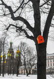 Winter in Saint Petersburg Royalty Free Stock Image