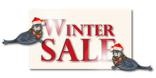 Winter sale banner, sign, background with polar dichtung Royalty Free Stock Image