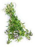 Winter Savory (isolated on white) Stock Photo