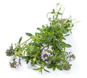 Winter Savory (isolated on white) Stock Photos