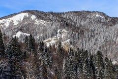 Winter scape Stock Photo