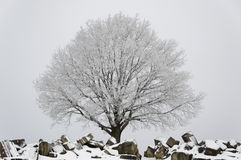 Winter scenario - tree and ruins Stock Image