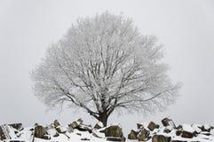 Winter scenario - tree and ruins stock image