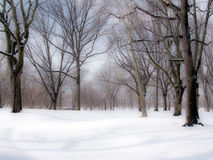 Winter scence. Winter snow fall in a park Royalty Free Stock Photo