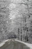 Winter Scene. Forest motorway with snow trees Royalty Free Stock Image