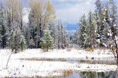 Winter Scene. Snow-covered trees and pond stock photos