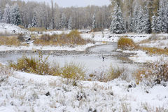 Winter Scene. Snow-covered trees and pond royalty free stock photo