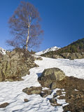 Winter Scene. Snowy mountain landscape with a tree as main subject of the image and some rocks on the foreground. Typical winter image Stock Image