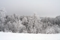 Winter scene Stock Images