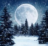 Winter scene. Wonderful view of a winter scene at night with full moon Stock Photos
