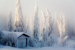 Winter scene Royalty Free Stock Image