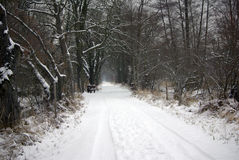 Winter scene. Walkway in the forest at wintertime full with snow Stock Images