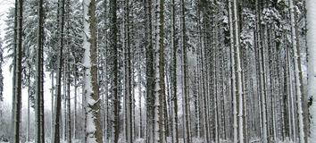 Winter scene. White winter in frozen forest with trees Stock Image
