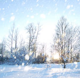 Winter scene. With snow and snowflakes stock image
