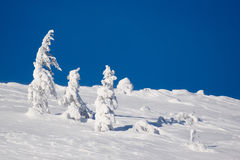 Winter scene. Snowy winter scene of the hill and small trees Stock Image