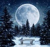 Winter scene. Wonderful winter scene in at night with a brilliant moon lighting the scene