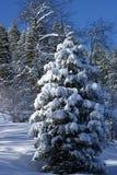 Winter scene. Winter fru free snow scene Stock Photo