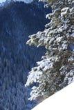 Winter scene. Winter fru free snow scene Royalty Free Stock Photos