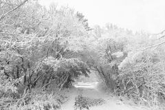 Winter scene. Walking path way during a winter storm royalty free stock images
