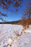 Winter scene. Beautiful winter scene in a Michigan state park Stock Images