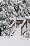 Winter scene. Stock Photos
