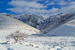 Winter scene Royalty Free Stock Images