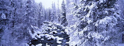 Winter Scene. Panoramic view of winter scene with evergreens and creek in snow royalty free stock photo
