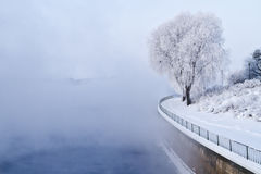 Winter scene. White frozen tree on a misty winter day in Oulu, Finland royalty free stock images