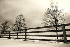 Winter scene. Three trees behind fence stock photos