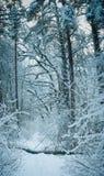 Winter scene. Winter magic frosty cold january christmas scene Stock Image