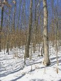 Winter scene. In snow Stock Photography