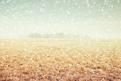 Winter scene. Magical winter scene with field and falling snow royalty free stock photo