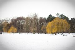 Winter scene. Of an ice covered lake with weeping willow tree on the waters edge Stock Photography