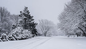 Free Winter Scene Royalty Free Stock Images - 29632469