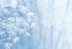 Free Winter Scene Stock Photos - 36425073