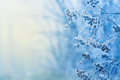 Free Winter Scene Royalty Free Stock Image - 36425116
