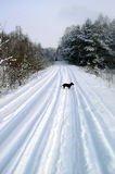 Winter Scene. A winter scene - road with a dog stock images
