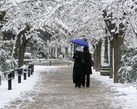 Winter scene. A couple with an umbrella strolling in a park full of snow royalty free stock photo